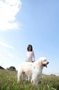 ゴールデンドゥードル ミックス犬 ボーダーコリー シェパード パグ フレンチブルドッグ