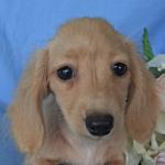 ブリーダー 子犬販売の専門店 AngelWan 横浜