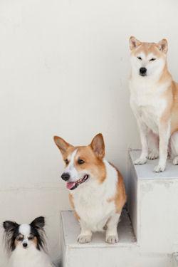 FAQ Q&A 質問集  ブリーダーの子犬販売AngelWan ペットショップ