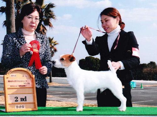 ジャックラッセルテリア 子犬販売の専門店 AngelWan 横浜
