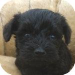 ミックス ブリーダー 子犬販売の専門店 AngelWan 横浜
