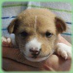 犬種 ブリーダー子犬販売専門店 Angel wan 横浜
