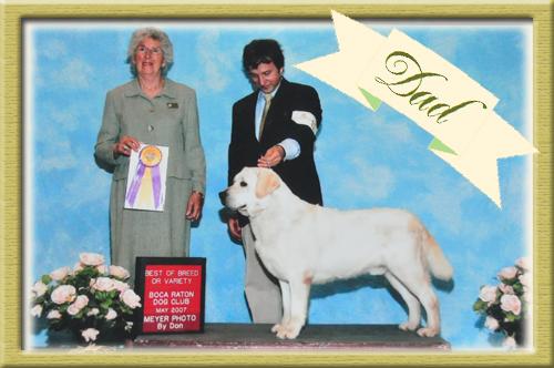 ラブラドールレトリバー ブリーダー子犬販売専門店 Angel Wan 東京 神奈川 千葉