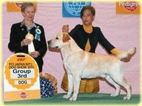 ラブラドールレトリバー ブリーダー子犬販売専門店 AngelWan 東京 神奈川 千葉