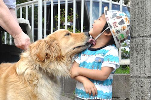 子犬販売の専門店 AngelWan ゴールデンレトリバー