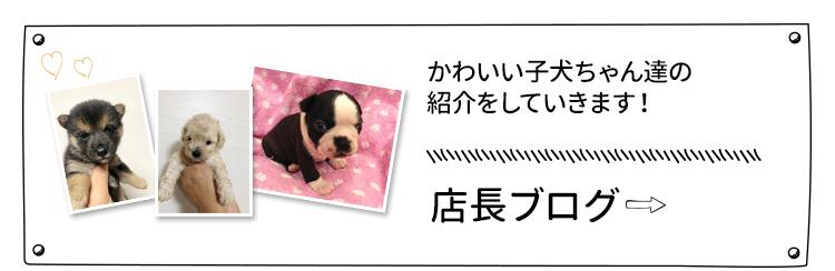 店長ブログ かわいい子犬ちゃん達の紹介をしていきます!