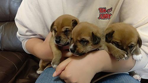 ミックスの子犬 子犬専門AngelWan 横浜