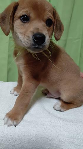 ミックスの子犬 ブリーダー 子犬販売の専門店AngelWan 横浜